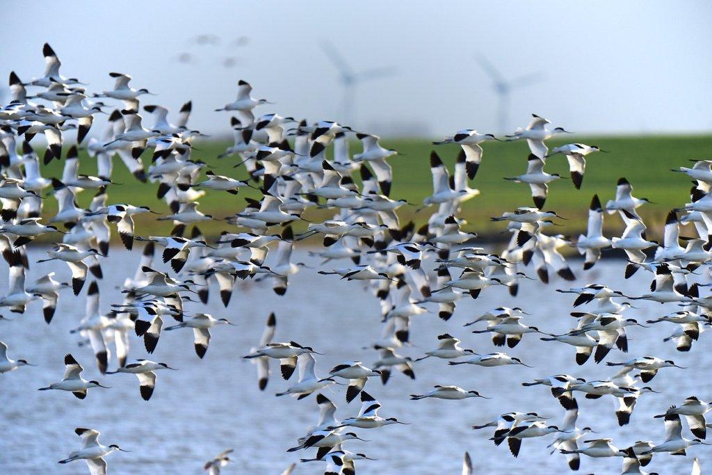 Travel Trailer rentals for Harvey Harney Bird Festival